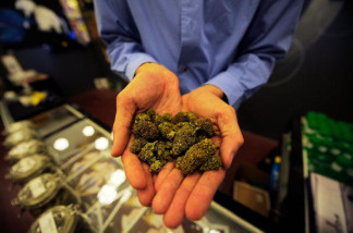 Tim Blakeley, manager of Sunset Junction medical marijuana dispensary, shows marijuana plant buds in Los Angeles, California.