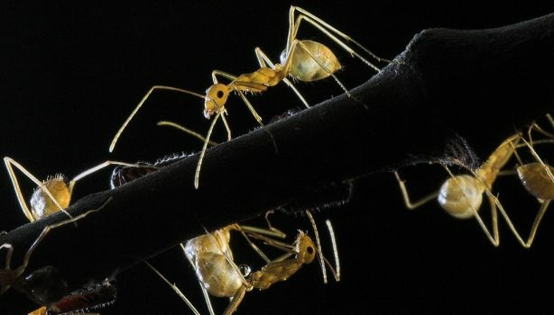 Backlit ants. What do their colonies and sexual behavior tell us about being human?