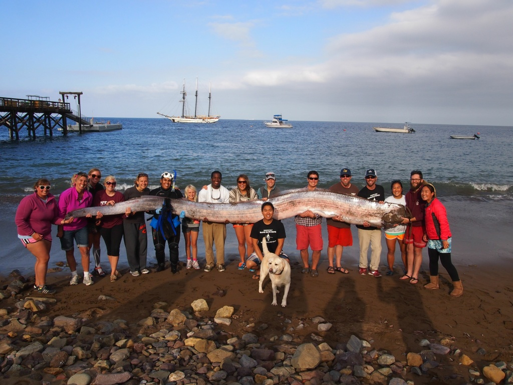 Marine science instructor Jasmine Santana said she spotted an 18-foot oarfish — which resembles an eel — while snorkeling near Toyon Bay.
