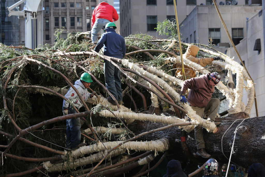 Workers prepare the Rockefeller Center Christmas tree before standing it up on November 14, 2012 in New York City.