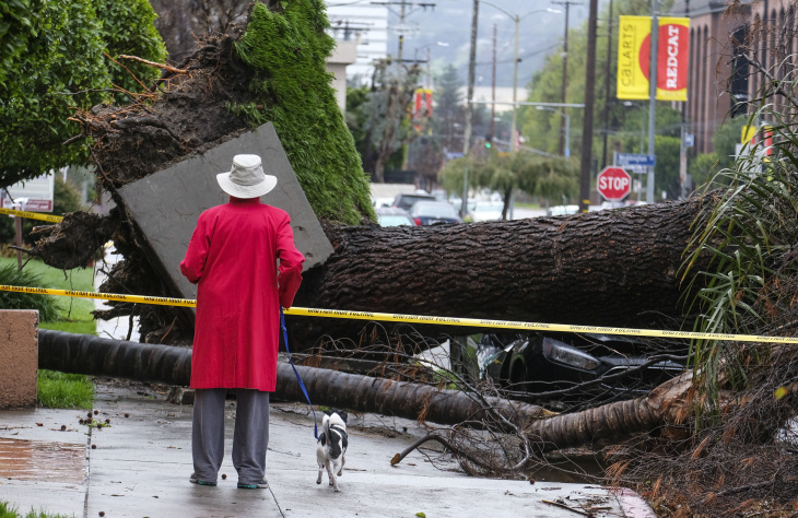 A woman with her dog stops to look at a fallen tree that crushed a car Saturday, Feb. 18, 2017, in Sherman Oaks section of Los Angeles. A huge Pacific storm parked itself over Southern California and unloaded, ravaging roads and opening sinkholes.   (AP Photo/Ringo H.W. Chiu)