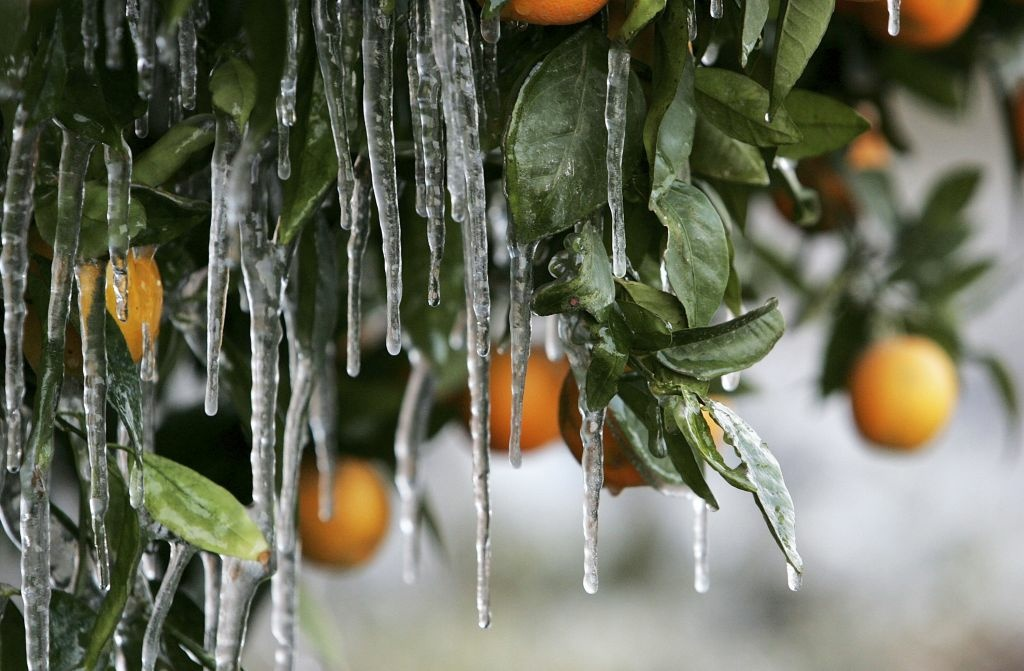 In this file photo, icicles created by drip irrigation are illuminated by a car's headlights as they hang from an orange tree January 17, 2007 in Orange Cove, California. Southern California could see another round of freeze and frost warnings heading into Wednesday morning.