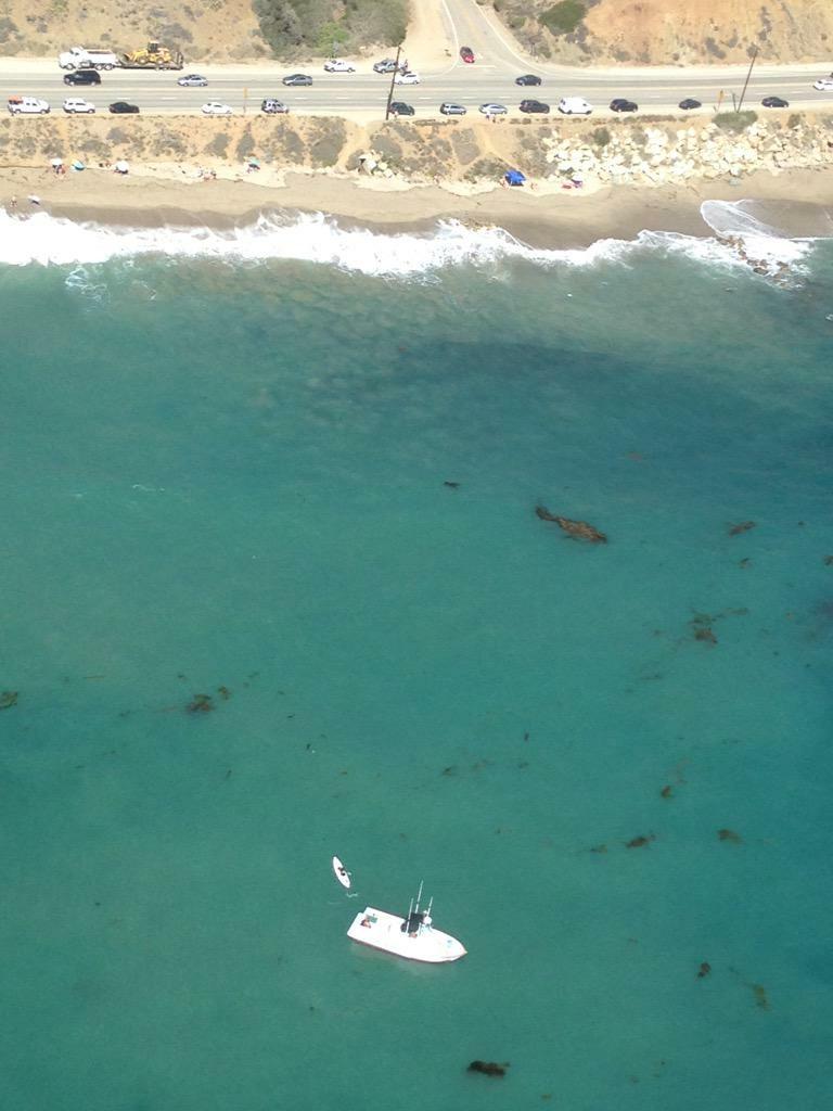 Video: Hammerhead shark attacks kayaker near PCH | 89.3 KPCC