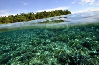 Mangroves and coral reef grow off Bunaken Island national marine park in northern Sulawesi. The tiny island is a marine protected area with a flourishing coral reefs, seagrass bed and mangrove that is home to endangered species such as dugongs, sea turtles, giant clams and others.