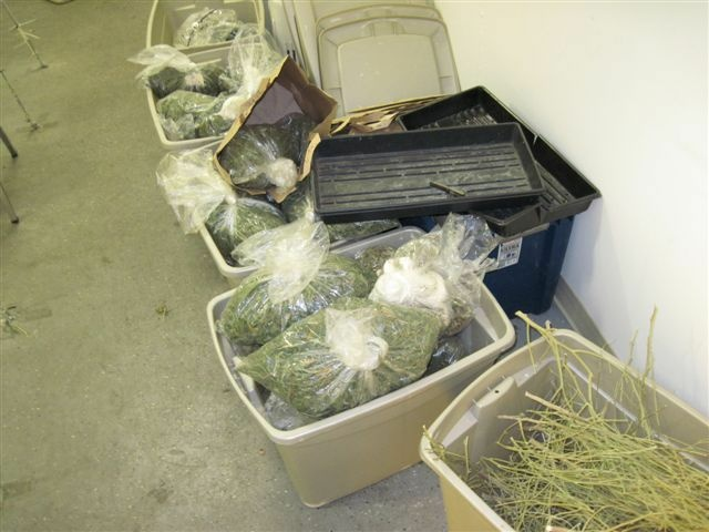 Pot taken during an Oct. 10, 2012 Long Beach police raid on medical marijuana dispensaries.