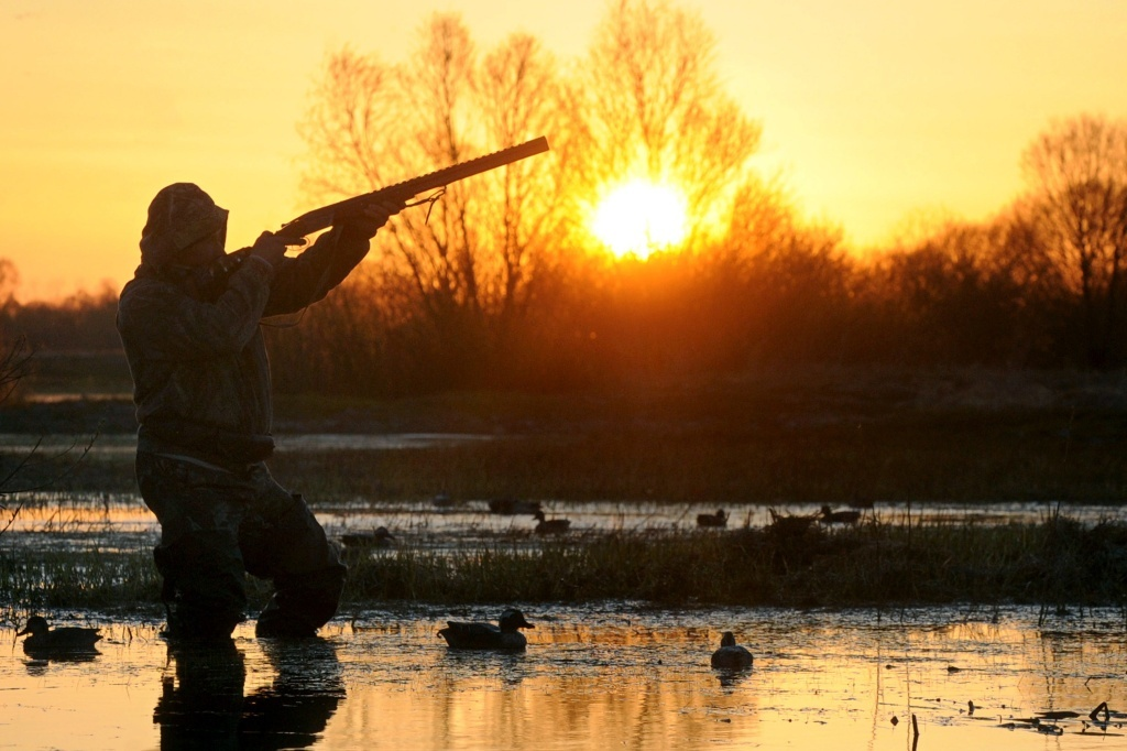 A hunter aims and prepares to shoot a wild duck