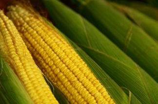The price paid to farmers for a bushel of corn averaged $4.78 in October, up from $3.61 in the same month last year.