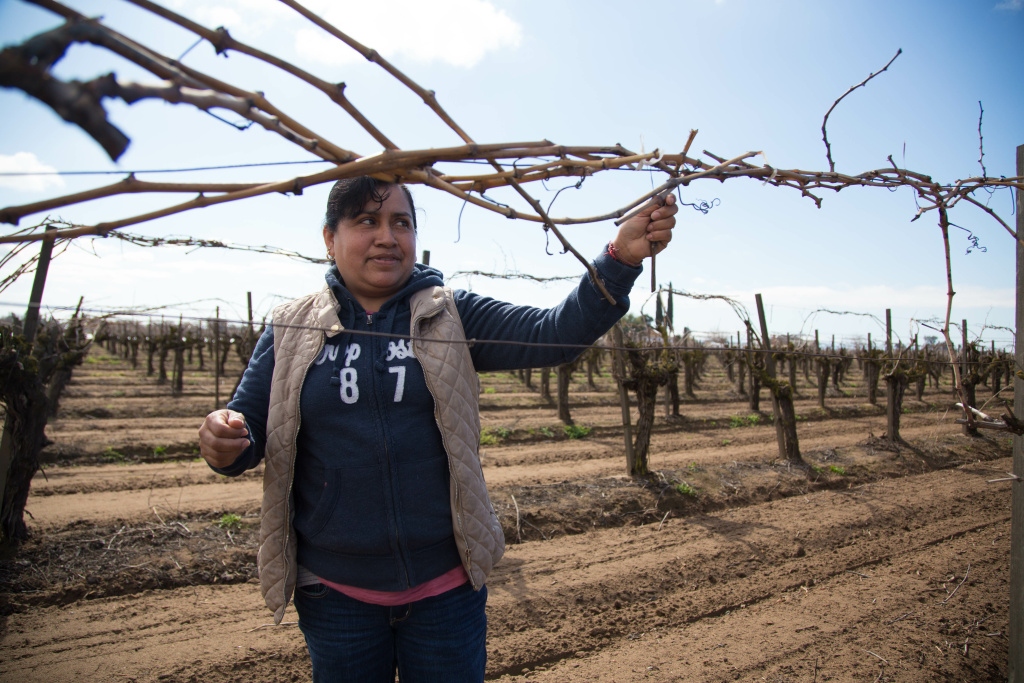 Alma demonstrates how she trims grape vines in a Fresno vineyard where she's recently worked.
