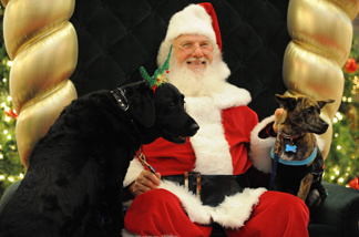 Reesha (L), a Labrador Retriever service dog and Jorja, a mixed breed dog, pose with Santa Claus.