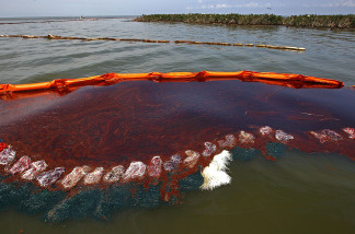 Heavy oil pools along the side of a boom just outside Cat Island in Barataria Bay June 6, 2010 near Grand Isle, Louisiana.