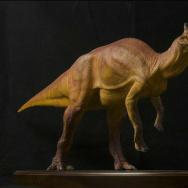 Augustynolophus morrisi dinosaur