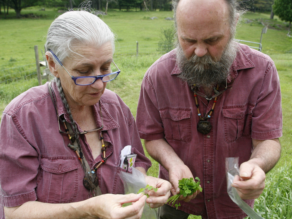 Nova Kim and Les Hook gather wild greens for a picnic salad near their home in Fairlee, Vermont.