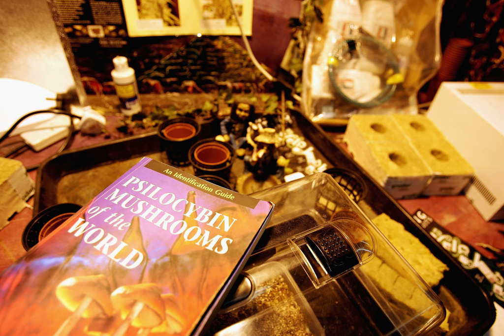 Mushroom growing kits lay on display in a store on July 18. 2005 in London, England. The sale of fresh mushrooms has been prohibited as of today due to the reclassification of the drug to Class A.