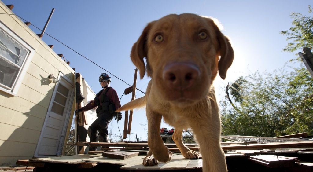 Cadaver dog' work more accepted by cops, courts | 89.3 KPCC