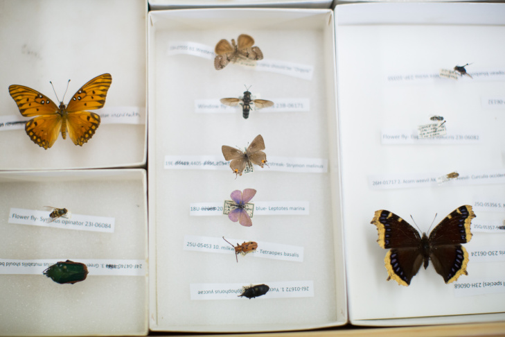 As of now, the BioSCAN project is using museum staff and USC students to sort the collected insects. Later this summer, the museum will begin accepting volunteers from the public to help out as well.