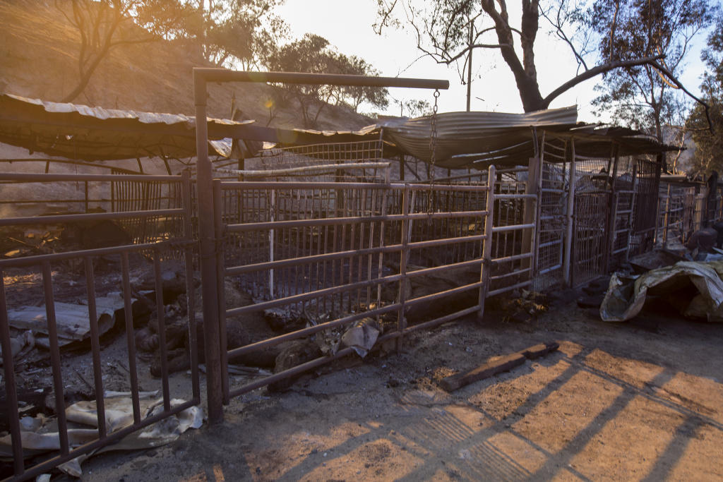 Dead horses lies in stalls at Rancho Padilla where 29 horses and numerous other animals died in the Creek Fire near Sylmar, California on December 6, 2017.
