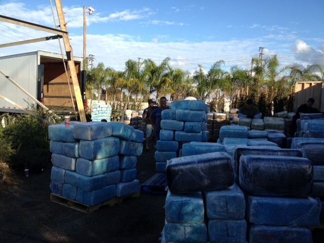 This is some of the 16 tons of pot seized at the Rolling Hills Nursery in Long Beach Thursday, December 13, 2012, in one of the biggest marijuana busts in California history.  (Credit: LA County Sheriff's Department)