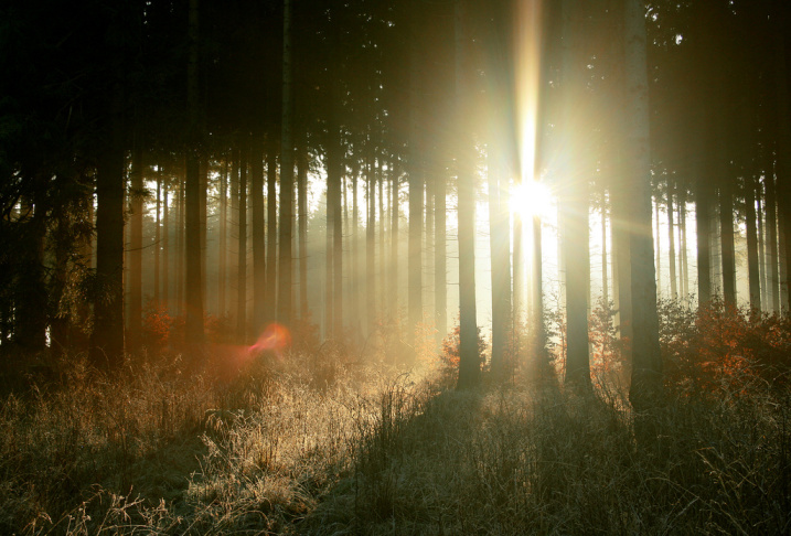 morning trees sunlight forest