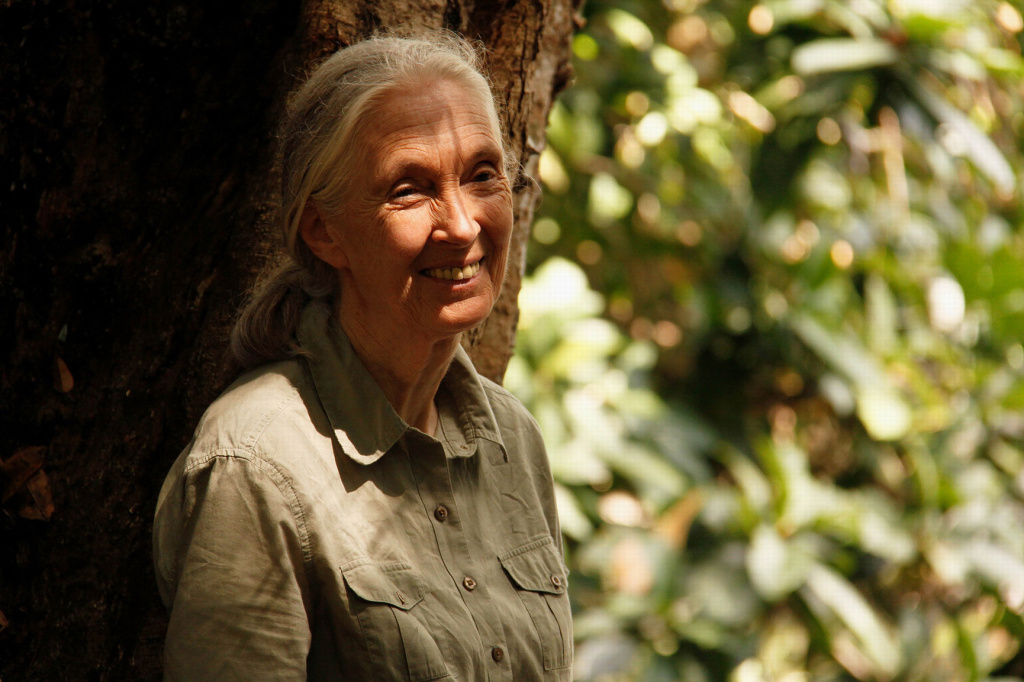 A portrait of Jane Goodall while the documentary was being shot in Tanzania.