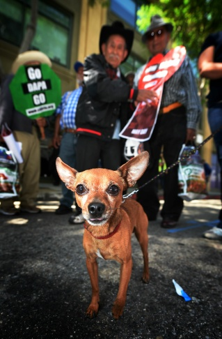 LOS ANGELES, CALIFORNIA - MAY 1:  A mostly immigrant crowd participates in a May Day march by the Coalition for Humane Immigrant Rights of Los Angeles (CHIRLA) on May 1, 2016 in Los Angeles, California. Immigrants, union members, workers and supporters are participating in the annual marches in downtown Los Angeles to call for greater rights for immigrants and improved conditions for workers.  (Photo by David McNew/Getty Images)
