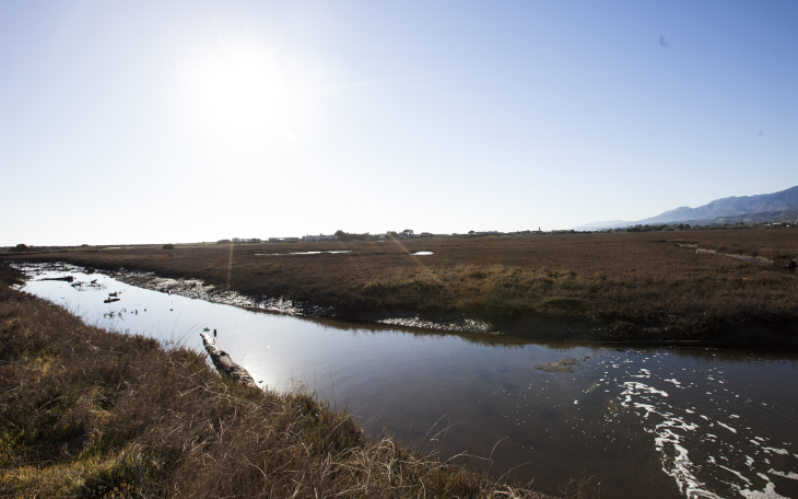 One of the many winding channels of the Carpinteria Salt Marsh Reserve.