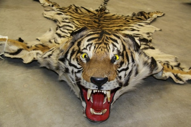 ... to sell exotic animals, exotic animal clothing and more   89.3 KPCC