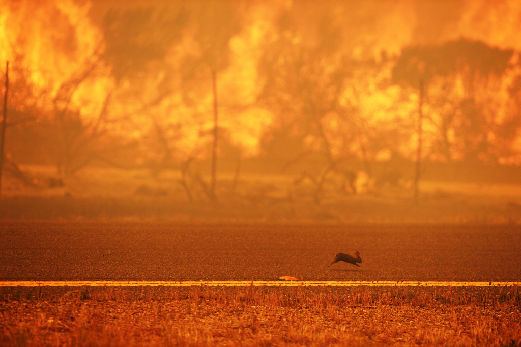 A rabbit runs from a wildfire burning along the Pacific Coast Highway near Point Mugu State Park in Ventura County, California, on May 3, 2013.