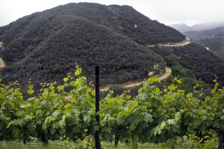 A winery flanks a section of the Santa Monica Mountains. Property owned by director James Cameron in the mountains could be sold as conservation land.