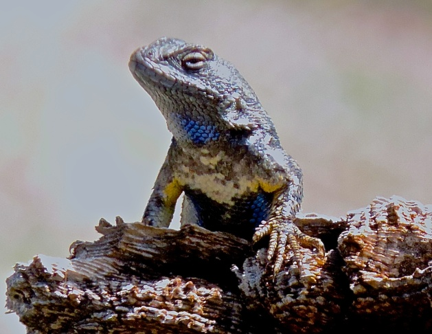 A UCLA study with western fence lizards showed that wearing different colors can affect how animals react to humans.
