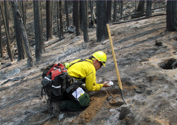 Yosemite Fire-Ecological Bonanza