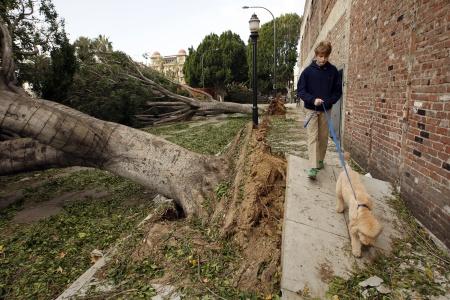 Pasadena Wind Storm