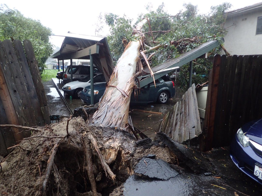 In this image released by the Santa Barbara County Fire Department, a large eucalyptus tree toppled onto carport damaging vehicles in Goleta, Calif., Friday, Feb. 17, 2017. A powerful Pacific storm blew into southern and central California on Friday, unleashing wind-driven heavy rains that forecasters said could become the strongest in years if not decades.