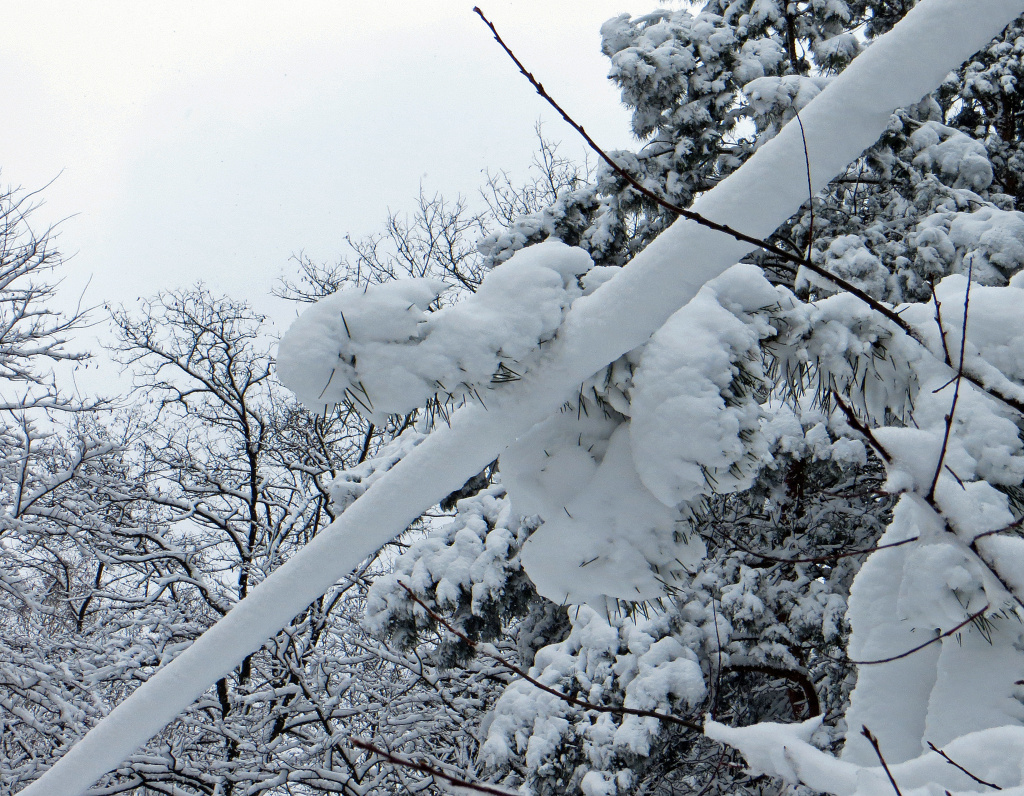 File photo: Fresh snow leads to big problems for utilities when it weighs down trees, branches and power lines.