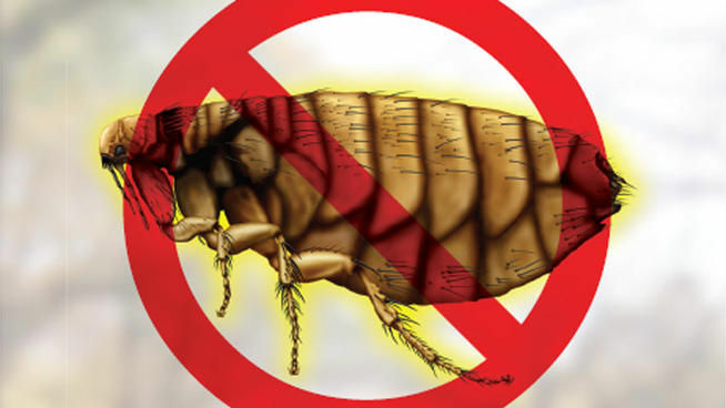The Orange County Vector Control District has reported a case of flea-borne typhus in Santa Ana. This image is from the district's warning flyer that was distributed to residents.