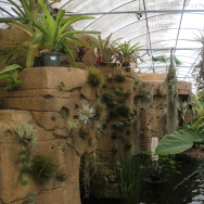 The retail space at Rainforest Flora in Torrance features waterfalls, a koi pond and thousands of tillandsias that hang from the ceiling and cling to rock faces.