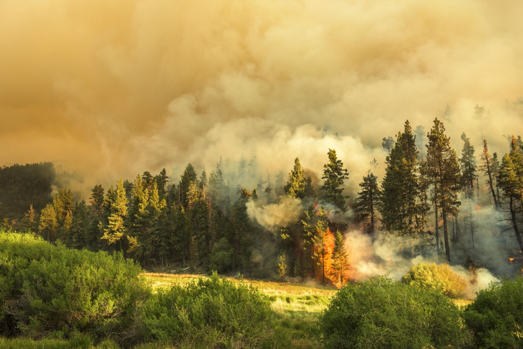 File: A stand of trees go torch on the northern flank of the Lake Fire.