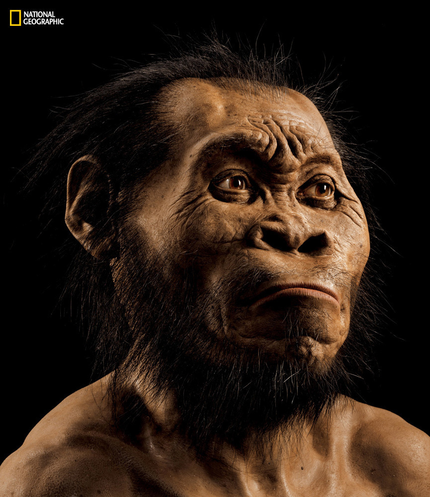 National Geographic paleoartist John Gurche used fossils from a South African cave to reconstruct the face of <em>Homo naledi,</em> the newest addition to the genus <em>Homo.</em>