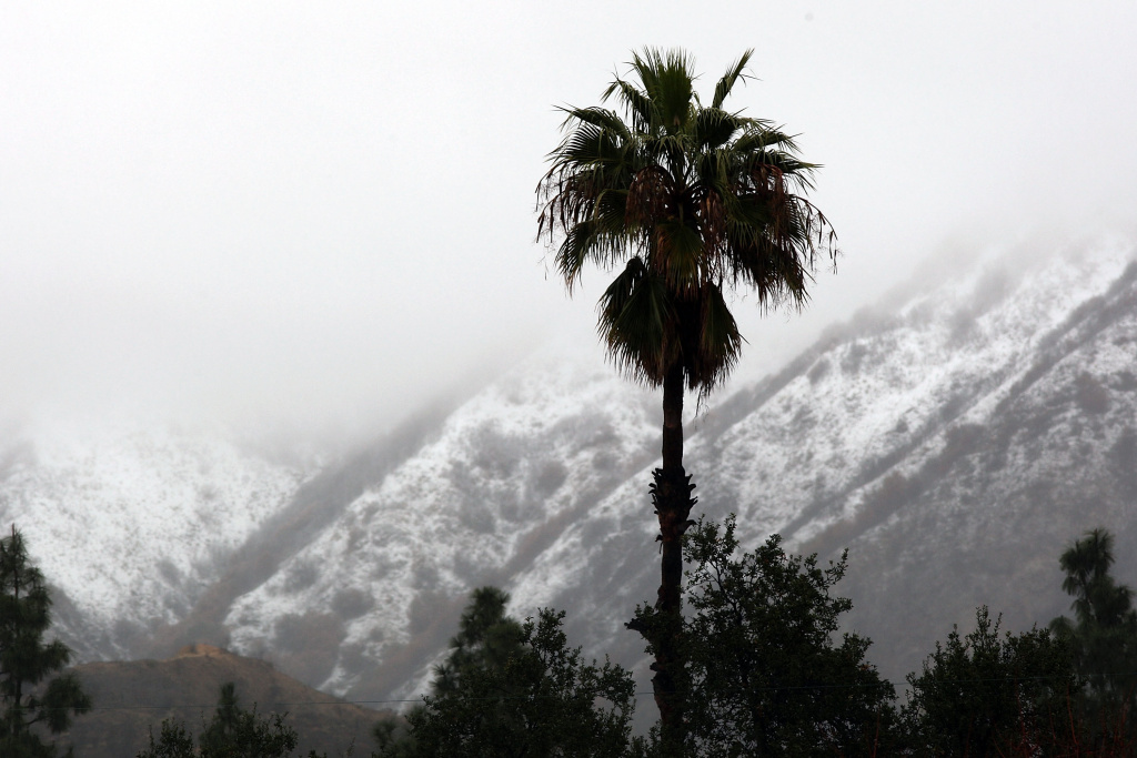 A palm tree is silhouetted as snow accumulates on the hills above neighborhoods after major storms hit La Canada Flintridge, California in January 2010.