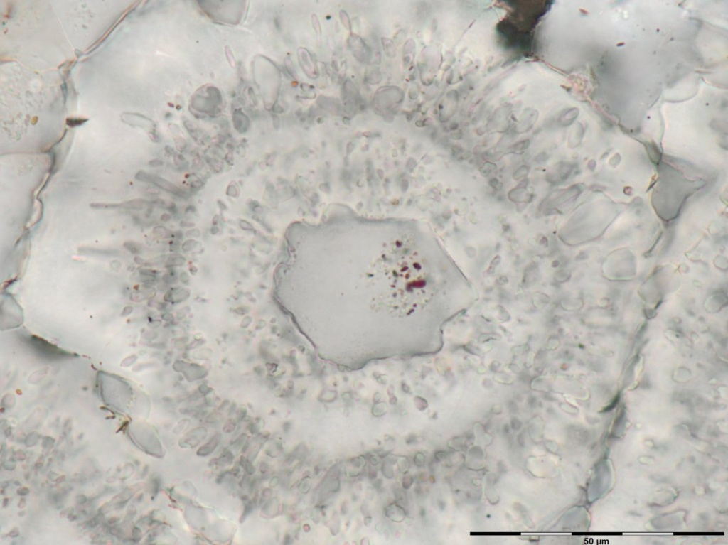 These shapes may have formed as microbes living around underwater vents released organic matter.