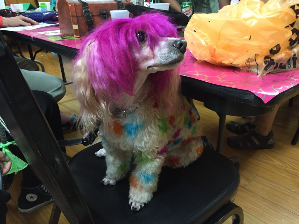 Heather the pup prepares for her Doodah queen audition