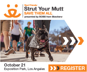 Best Friends Animal Society - Strut Your Mutt 2017