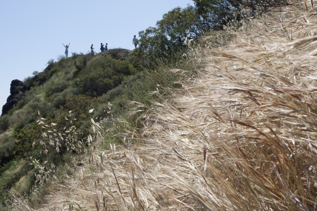 Dry vegetation is seen as a hiker raises her arms on a ridge in Griffith Park on March 29, 2015 in Los Angeles, California.