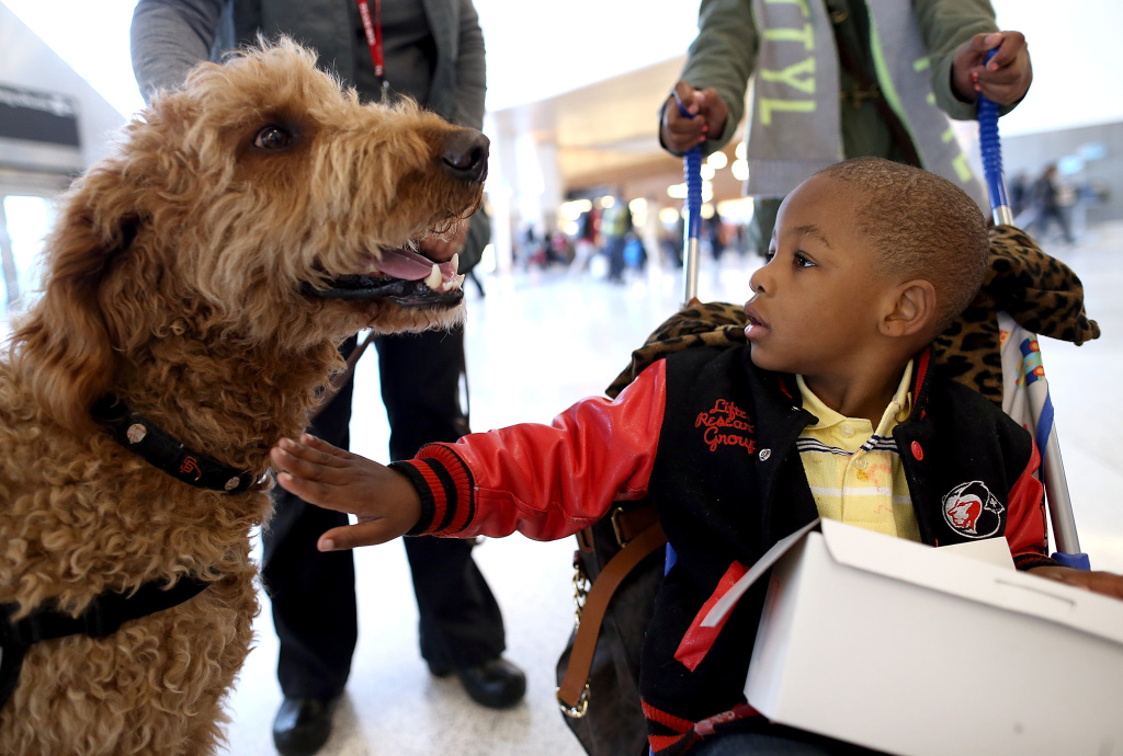 Therapy dogs and other pets have become more common in airports, like this one at San Francisco Airport. Hollywood Burbank Airport has added a new in-terminal pet relief station to save pet owners from having to leave secured areas.