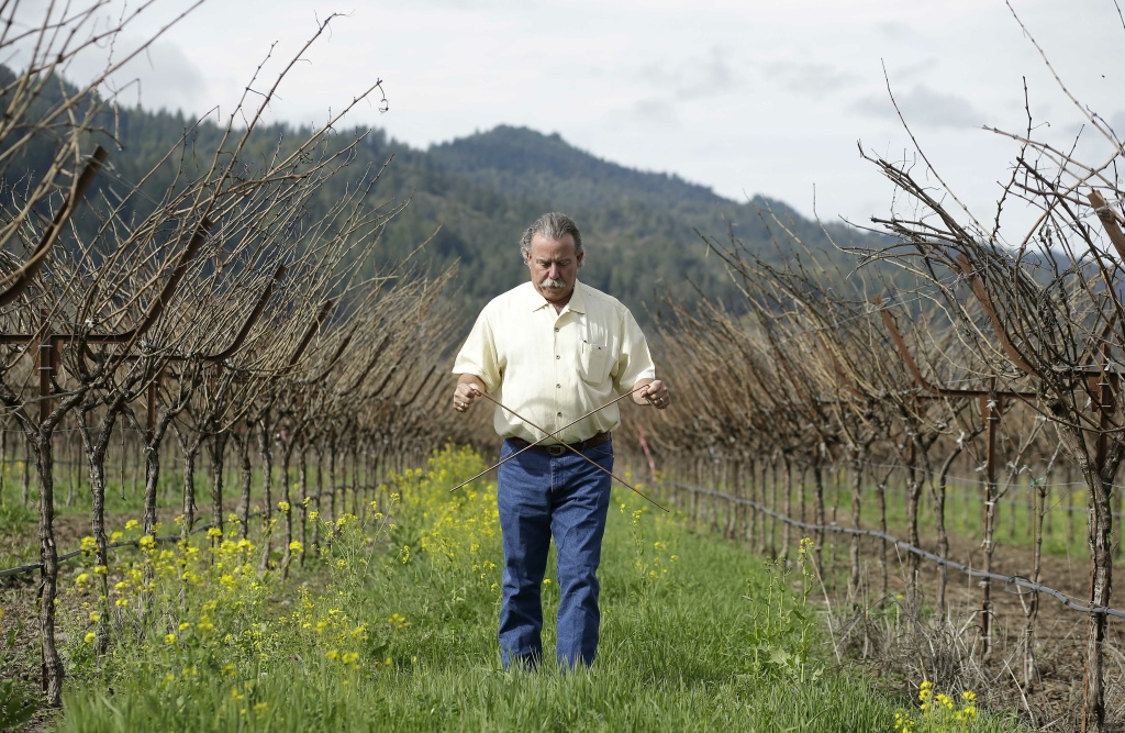 In this photo taken Thursday, Feb. 13, 2014, proprietor Marc Mondavi demonstrates dowsing with