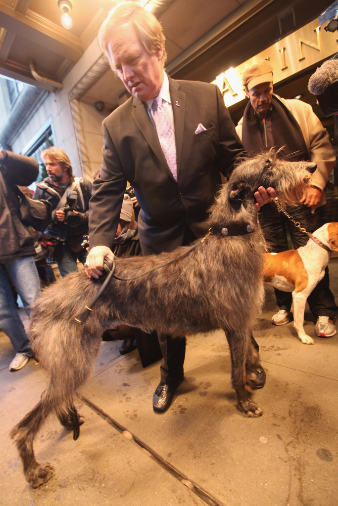 David Frei, Westminister Kennel Club director of communications, stands with Hickory, the Scottish Deerhound who won Best in Show in 2011.