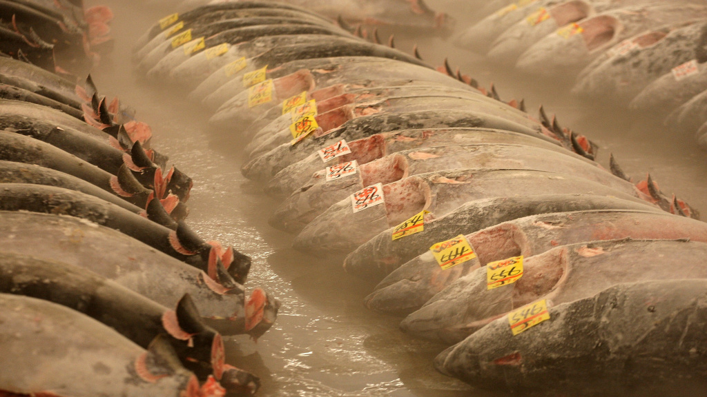 Frozen tuna lies on the ground at the Tsukiji fish market in Tokyo. The FDA recommends freezing raw fish before serving it in sushi as a way to keep it free of parasites. But as a recent outbreak of <em>Salmonell</em>a in the U.S. highlights, freezing doesn't guarantee that raw sushi fish is pathogen-free.