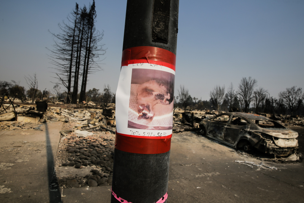 A lost cat poster is taped to a pole among the damage caused by the Tubbs Fire in the Coffey Park neighborhood of Santa Rosa, California on October 13, 2017.