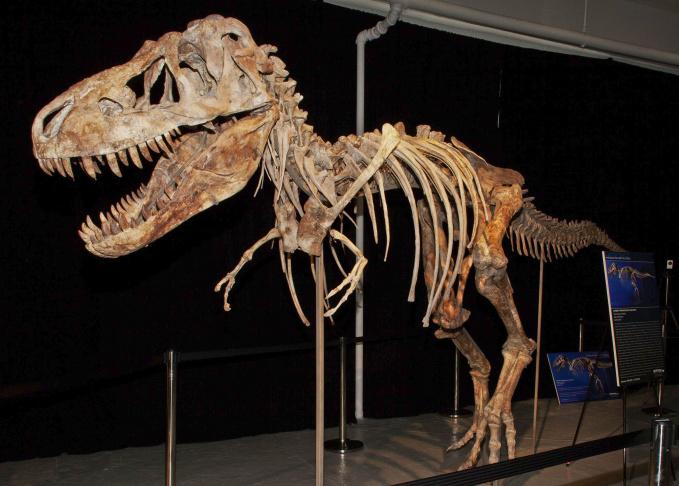 Dinosaur Dispute