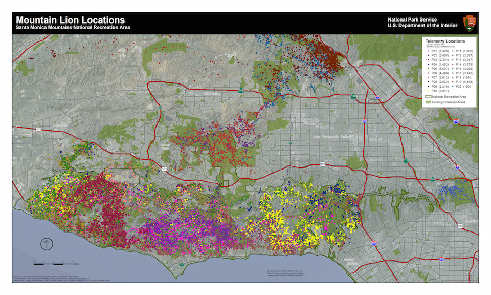 This map reflects the GPS data points of lions P-1 through P-22 from the start of research in 2002 through December 2013. Each color represents a different mountain lion. The 101 freeway is shown dividing the populations in half.
