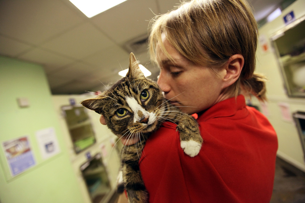 Supporters of a cat limit increase in Los Angeles say it will reduce the number of cats on the streets and in shelters.